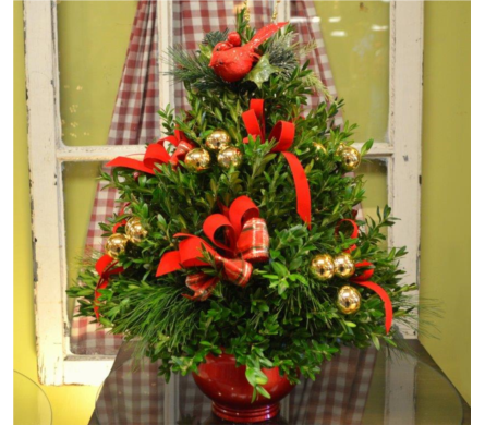 Holiday Boxwood Tree in Utica NY, Chester's Flower Shop And Greenhouses