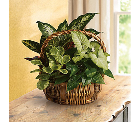 Emerald Garden Basket in Indianapolis IN, George Thomas Florist