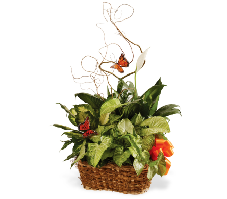 Triple Plant Basket in Big Rapids, Cadillac, Reed City and Canadian Lakes MI, Patterson's Flowers, Inc.