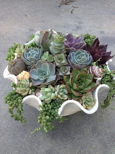 Wavy Succulent Planter in Kentfield CA, Paradise Flowers
