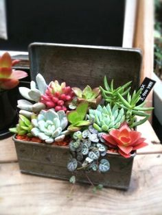 Succulent Treasure Box in Kentfield CA, Paradise Flowers