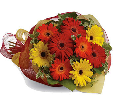 Gerbera Brights in Grand Falls/Sault NB, Grand Falls Florist LTD