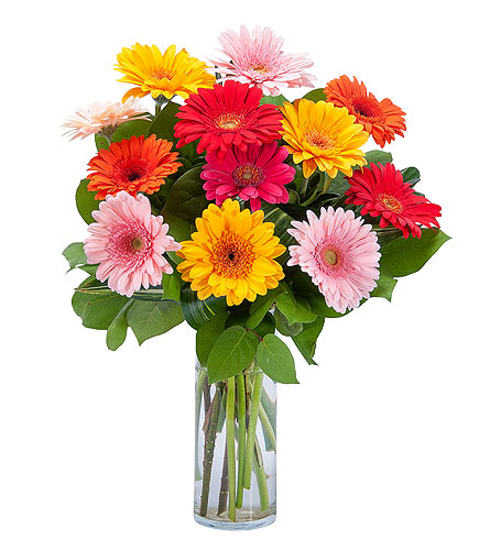 Grand Gerbera in Oshkosh WI, Flowers & Leaves LLC