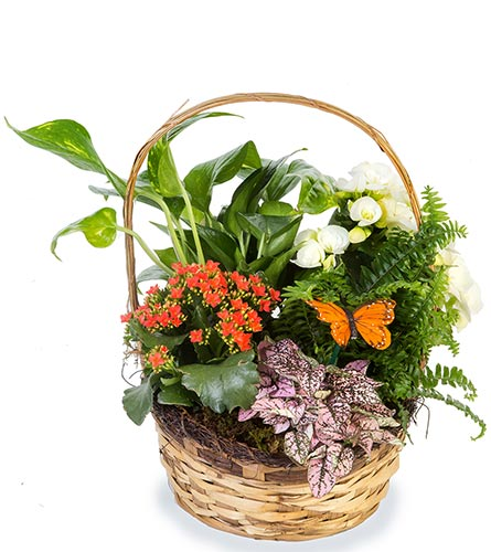 Green & Blooming Basket in Fort Worth TX, TCU Florist