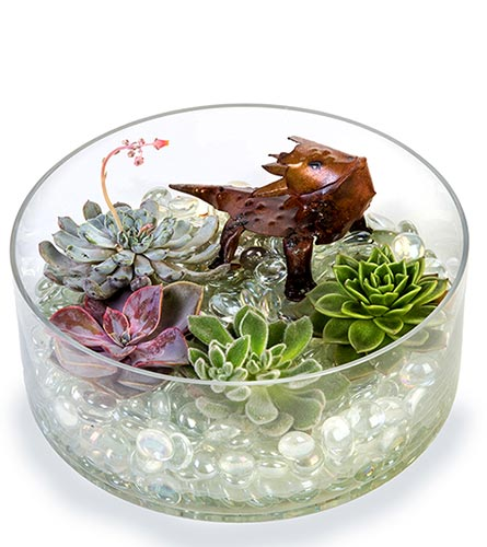 TCU Horned Frog Terrarium in Fort Worth TX, TCU Florist