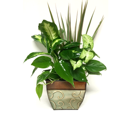 Square Green Metal Planter - 3 sizes available in Wyoming MI, Wyoming Stuyvesant Floral