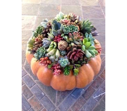 PUMPKIN PATCH SUCCULENT GARDEN  in Bellevue WA, CITY FLOWERS, INC.