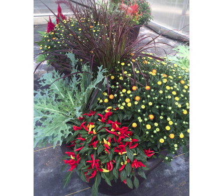 Fall Combo Pot in Dayton OH, Furst The Florist & Greenhouses