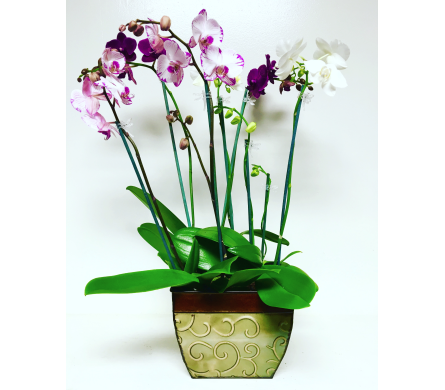 Orchid Plants in 8-1/2 inch Metal Planter in Wyoming MI, Wyoming Stuyvesant Floral