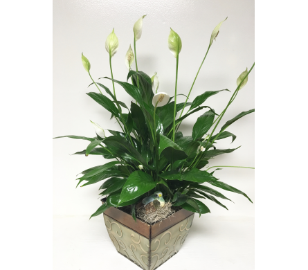 Peace Lily in 8-1/2 inch Metal Planter with Bird in Wyoming MI, Wyoming Stuyvesant Floral