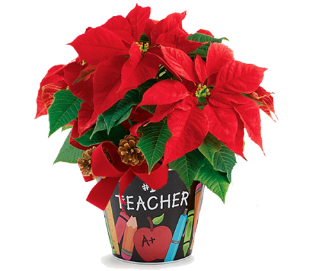 Worlds Best Teacher Poinsettia in Birmingham AL, Norton's Florist