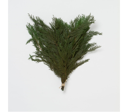 Fresh Port Oxford Cedar Bunch in Little Rock AR, Tipton & Hurst, Inc.