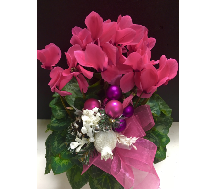 Pink Holiday in Needham MA, Needham Florist