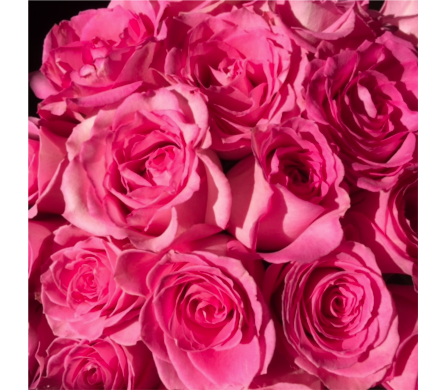 Premium Pink Roses in Ajax ON, Reed's Florist Ltd