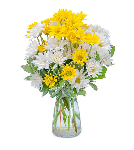Dazed Daisies in Spartanburg SC, A-Arrangement Florist