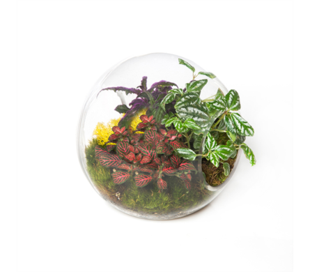 Delightful Terrarium in Little Rock AR, Tipton & Hurst, Inc.