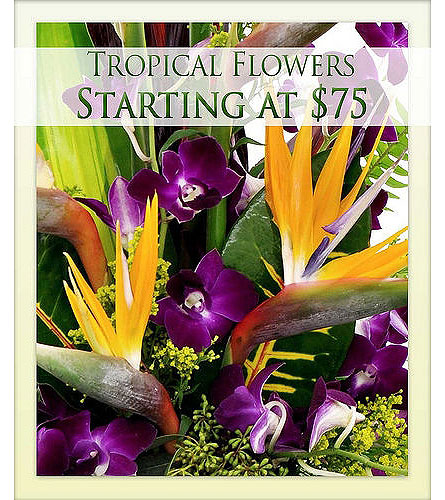 Designer Choice Tropical in Bradenton FL, Ms. Scarlett's Flowers & Gifts