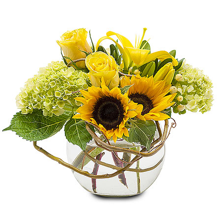Sunshine Rays in Redwood City CA, Redwood City Florist