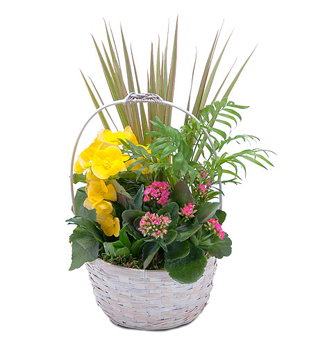Bloomin' Sunshine Days Basket in Abington MA, The Hutcheon's Flower Co, Inc.