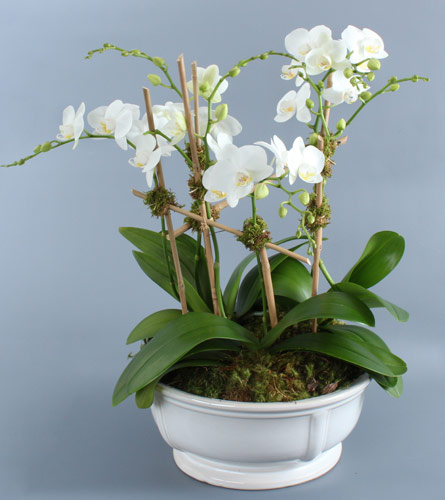 White mini orchids in low white container in darien ct nielsens view larger mightylinksfo