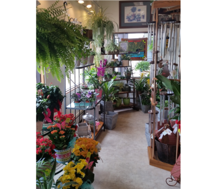 Blooming and Green Plants in Grand Rapids MN, Shaw Florists