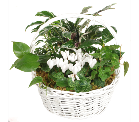White Basket Planter in Madison WI, Felly's Flowers