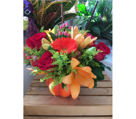 HARVEST PUMPKIN in Needham MA, Needham Florist