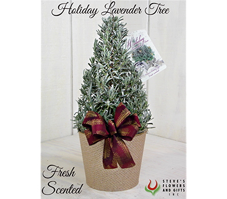 Holiday Lavender Tree in Indianapolis IN, Steve's Flowers and Gifts