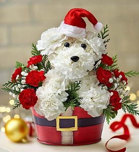 Santa Paws in Camp Hill and Harrisburg PA, Pealers Flowers