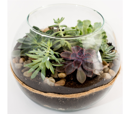 Glass Succulent Terrarium in Westerly RI, Rosanna's Flowers