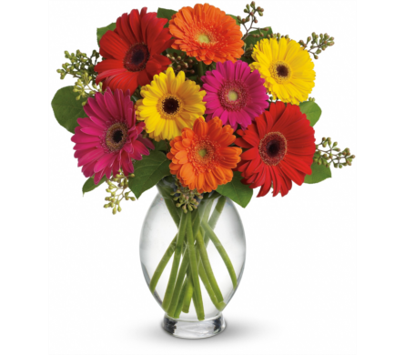 Teleflora's Gerbera Brights in Yonkers NY, Beautiful Blooms Florist