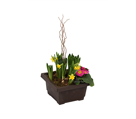 Spring Planter in St Catharines ON, Vine Floral