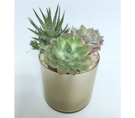 Succulent Garden in 5x5 Gold Glass Cylinder in Wyoming MI, Wyoming Stuyvesant Floral
