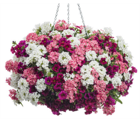 Hanging Basket in Homer NY, Arnold's Florist & Greenhouses & Gifts