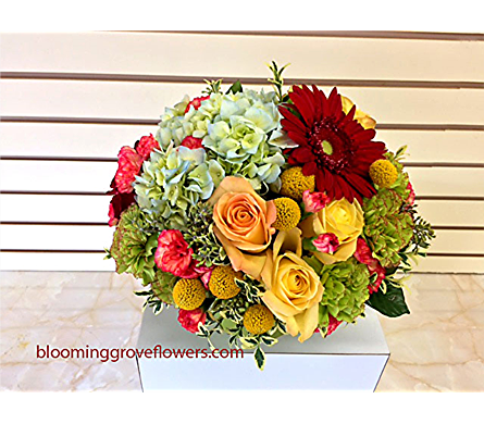 BGF2582 in Buffalo Grove IL, Blooming Grove Flowers & Gifts