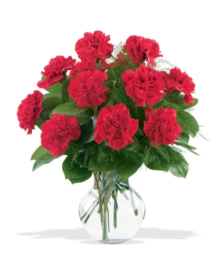 12 Red Carnations in Evansville IN, Cottage Florist & Gifts