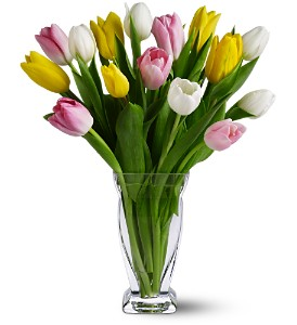 15 Mixed Tulips in Needham MA, Needham Florist