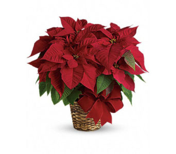 Medium Poinsettia in Basket  in Muskegon MI, Wasserman's Flower Shop