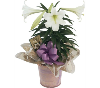 Easter Lily  in Needham MA, Needham Florist