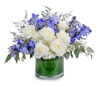 Blue Frost in Brockton MA, Holmes-McDuffy Florists, Inc 508-586-2000