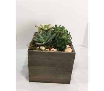 Succulent Box Large in Muskegon MI, Wasserman's Flower Shop