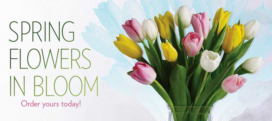 Send Spring flowers to Orangeville, ON with Orangeville Flowers & Greenhouses Ltd, your local florists