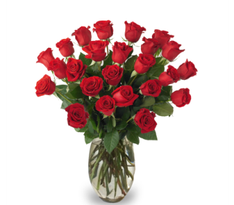 Roses - Two Dozen in Indianapolis IN, McNamara Florist