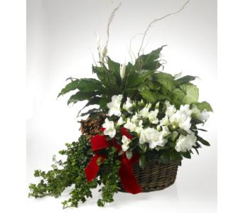 Holiday Garden in Indianapolis IN, McNamara Florist
