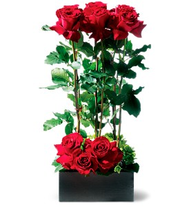 Scarlet Splendor Roses in Calgary AB, All Flowers and Gifts
