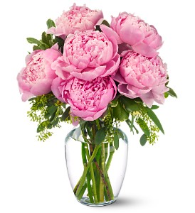 Peonies in Pink in Kanata ON, Talisman Flowers