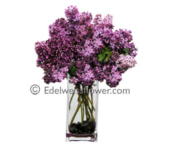 Lovely Lilacs Flower Bouquet in Santa Monica CA, Edelweiss Flower Boutique