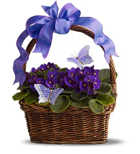 Violets and Butterflies in Santa Monica CA, Edelweiss Flower Boutique