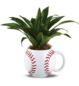 Teleflora's Line Drive Planter in Chattanooga TN, Chattanooga Florist 877-698-3303