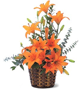 Asiatic Lilies in Santa Monica CA, Edelweiss Flower Boutique